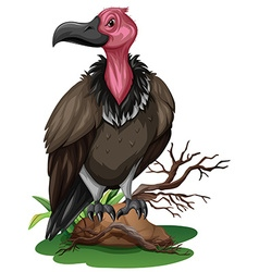 Wild vulture on the rock vector