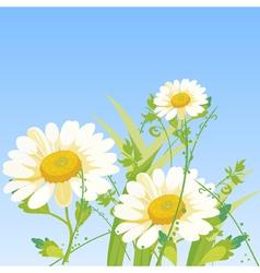 Cartoon daisy flowers vector