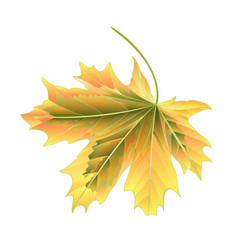 Leaf maple autumnal on a white background vector