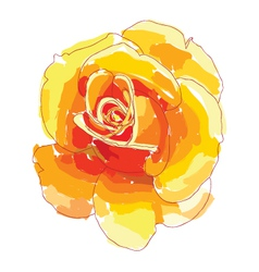 orange rose vector image