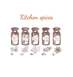 Hand drawn kitchen spices set vector