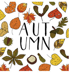 handdrawn unique autumn card with brush lettering vector image vector image