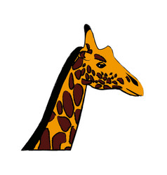 Head giraffe animal herbivore african wildlife vector