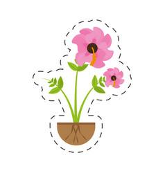 Hibiscus flower spring growing vector