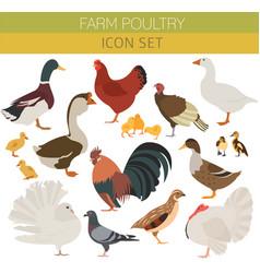 Poultry farming chicken duck goose turkey pigeon vector