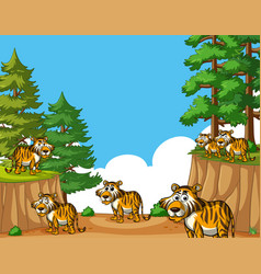 Tigers on mountain at daytime vector