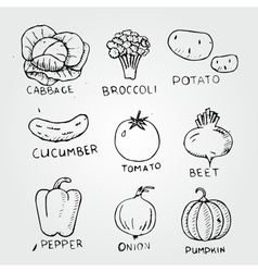 set of vegetables tomato cucumber potato vector image