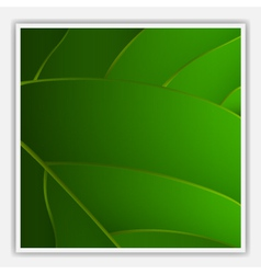 Creative leaf background vector