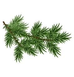 Fur-tree branch green fluffy pine branch vector