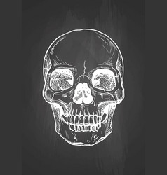 Human skull with a lower jaw vector