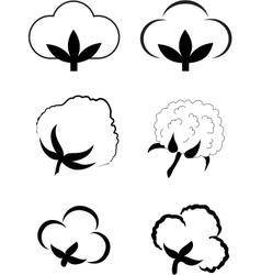 Cotton gossypium vector