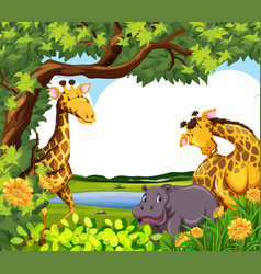 Giraffes and hippo by the pond vector