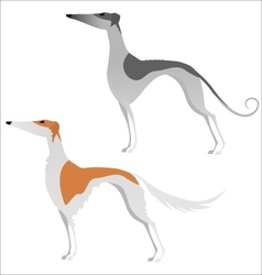Two isolated elegant greyhounds vector