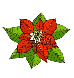 some branches of poinsettia vector image