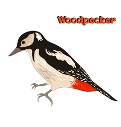 Bird woodpecker vector