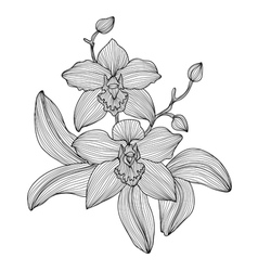 Decorative orchid vector