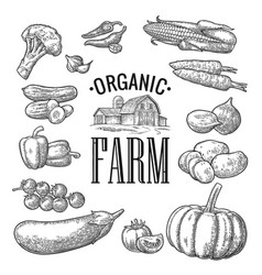 set vegetables and organic farm lettering vector image