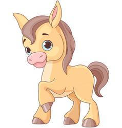 Baby horse vector