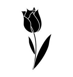 Beauty tulip flora nature pictogram vector