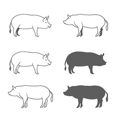 Set of Pig Isolated on White Background vector image vector image
