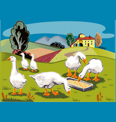 Some geese eat from a manger vector