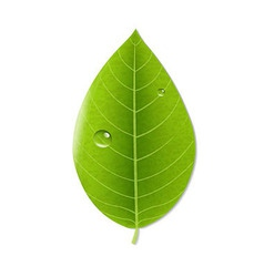 Eco green leaf vector