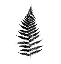 fern leaf silhouette vector image vector image