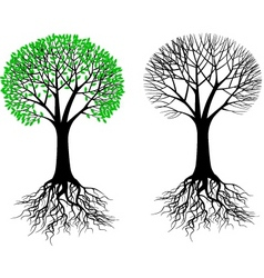 tree and root vector image