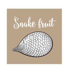 Whole unpeeled uncut tropical salak snake fruit vector
