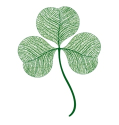 Leaf clover isolated macro vector