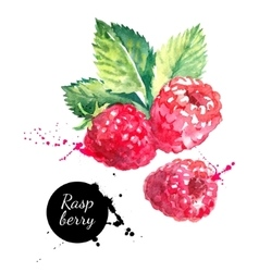 Hand drawn watercolor painting raspberry on white vector image