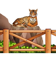 A tiger above the cliff vector image vector image