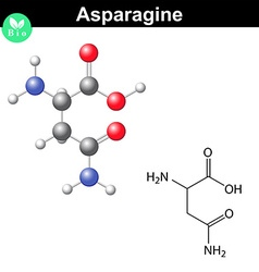 Asparagine proteinogenic amino acid vector