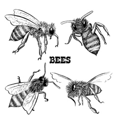 Collections of honey bee icons vector image