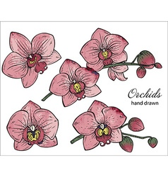 set of hand drawn orchid branches with flowers vector image