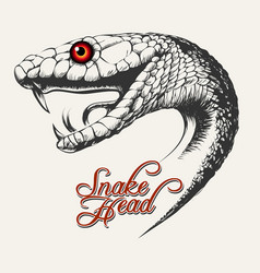snake head vector image