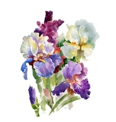 Watercolor blooming iris flowers vector image