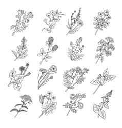 Botanical sketch drawings of vector