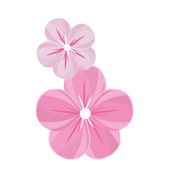 nice flowers with petals decoration vector image vector image