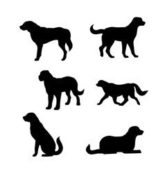 Breed of a dog st bernard silhouettes vector
