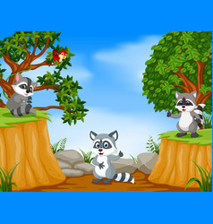 raccoons with mountain cliff scene vector image
