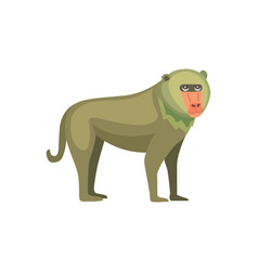 baboon monkey cartoon wildlife of vector image vector image
