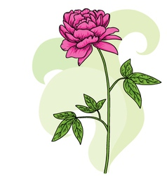 Floral pink peony card vector