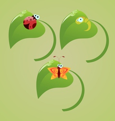 Insects vector