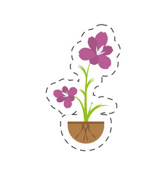 Amaryllis flower decoration growing vector