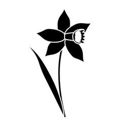 daffodil flower leaf bloom pictogram vector image