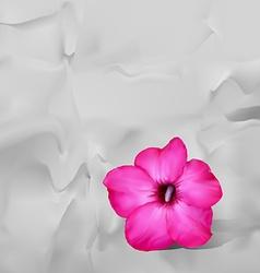 Desert rose flower with shadow on white paper vector