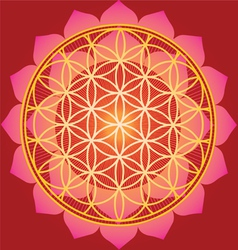 Sacred geometry flower of life mandala vector