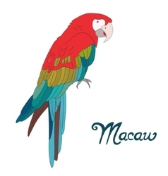 Bird macaw vector