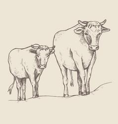 Cow and a calf walk along the road vector